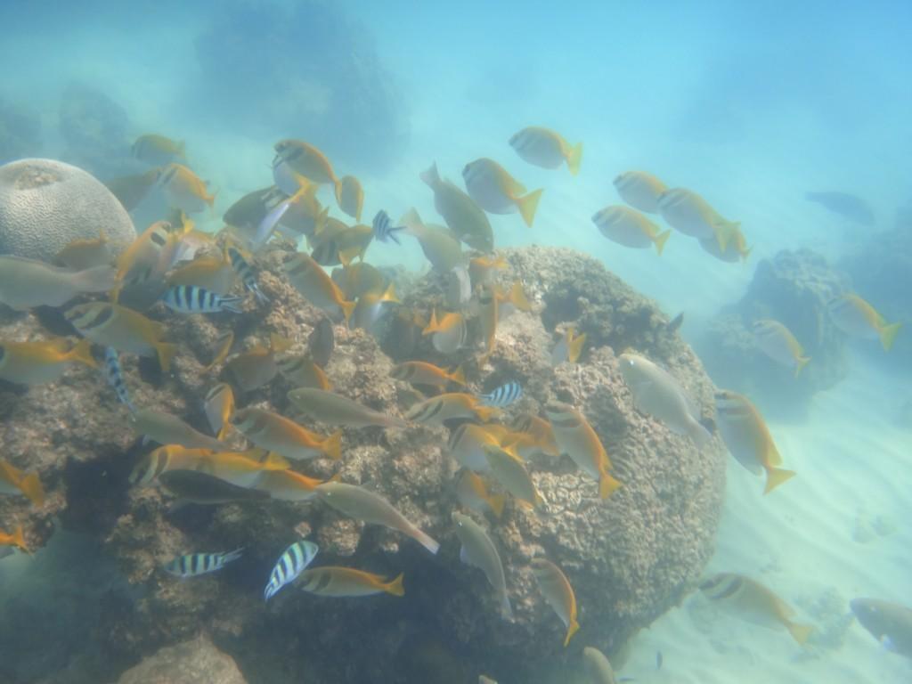 Snorkeling à Koh Phangan