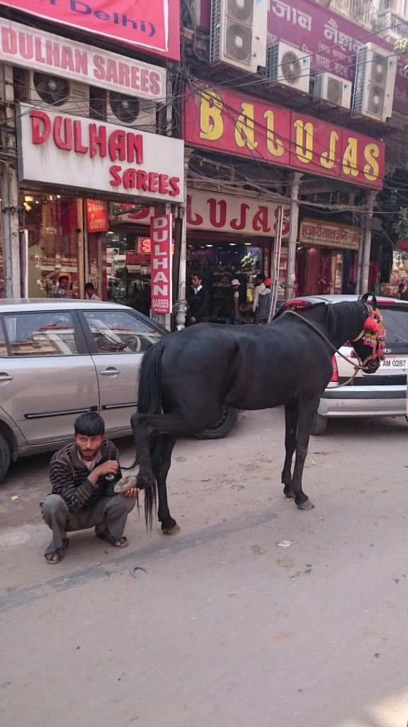 Un indien qui check le sabot de son cheval