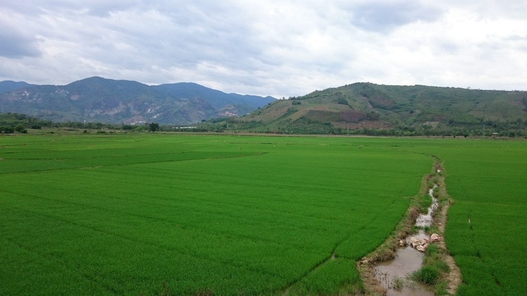Une rizière d'un vert à couper le souffle