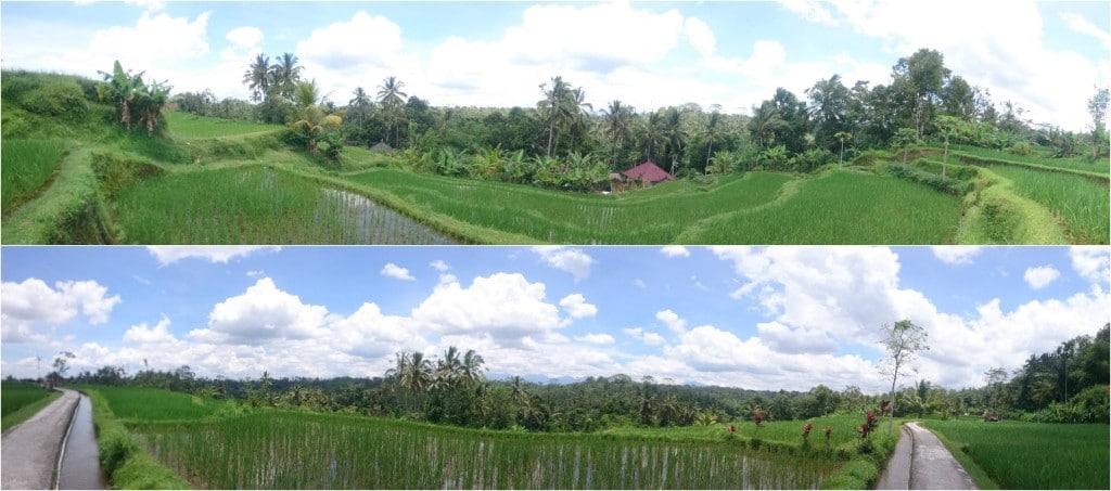 Au coeur des rizières de Bali