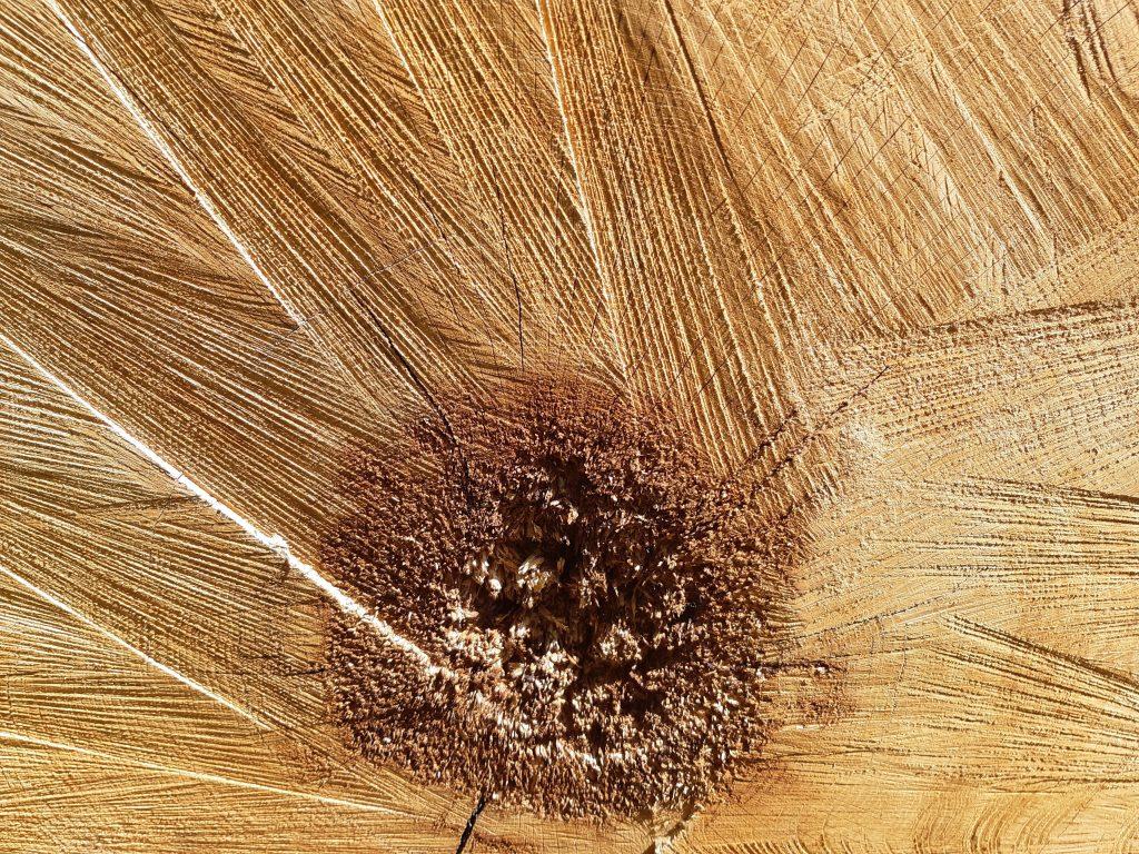 gros plan sur le coeur du tronc d'un arbre fraîchement coupé