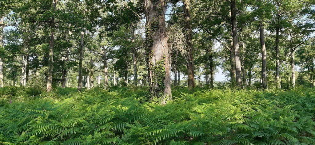 photo d'arbres et de fougères