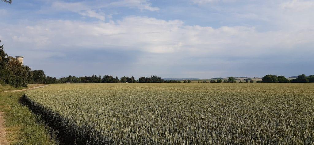 panorama d'un champs de blé